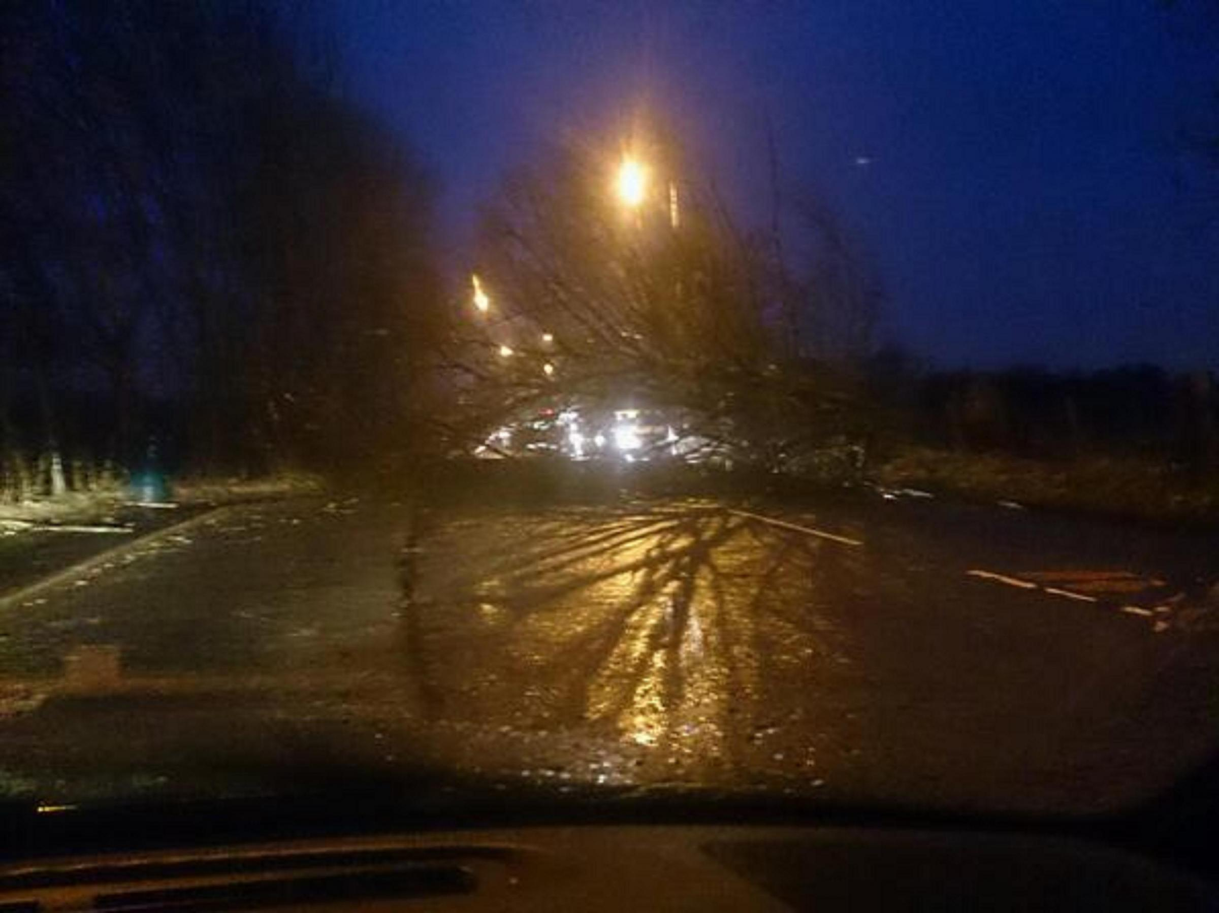 The tree blocking Ringley Road last night. Picture by @on2wheels via Twitter.