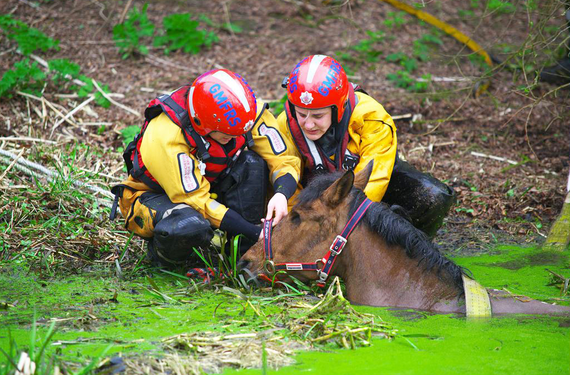VIDEO: Ten firefighters pull one-eyed horse from river