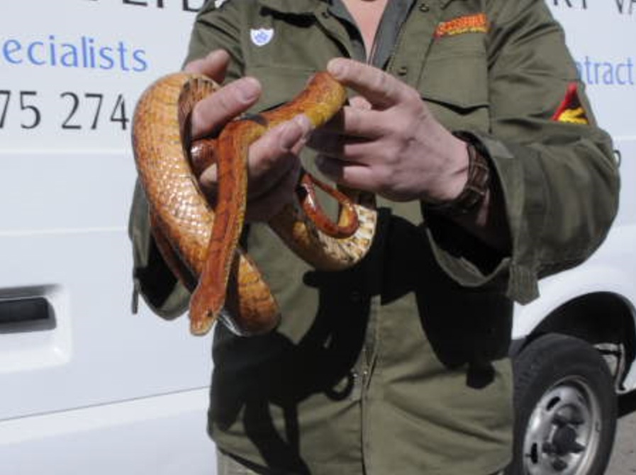 VIDEO: Four-foot snake found in back of hired van
