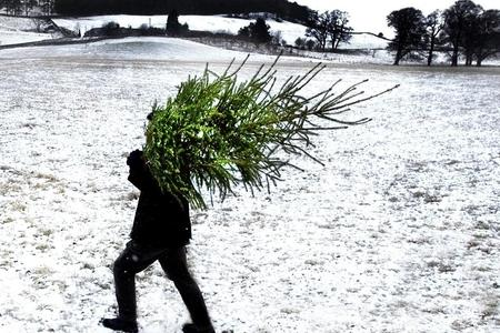 dead time to retire your old christmas tree - When Should You Take Your Christmas Tree Down