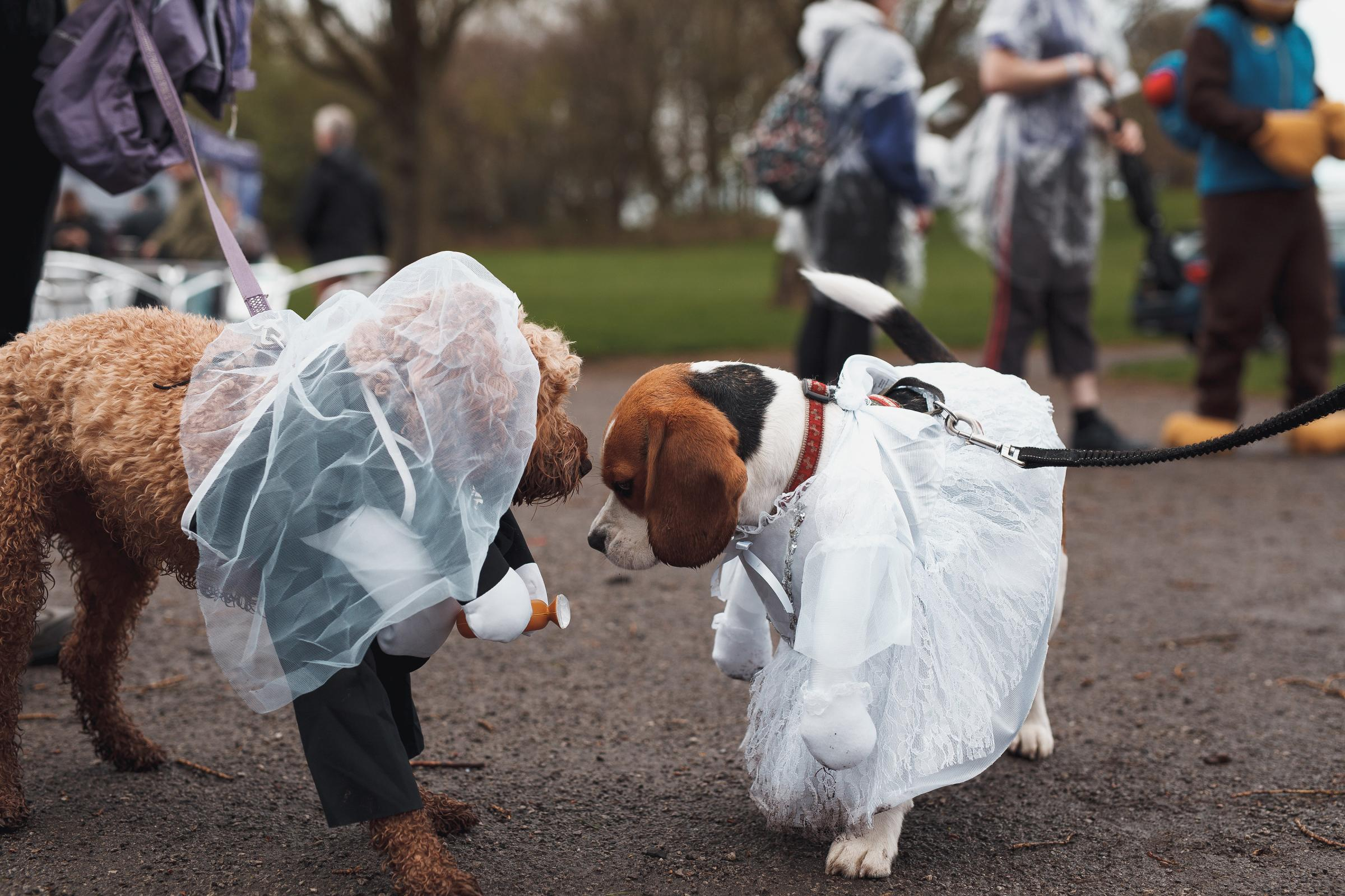 IN PICTURES: Hundreds of pooches wear fancy dress for dog festival