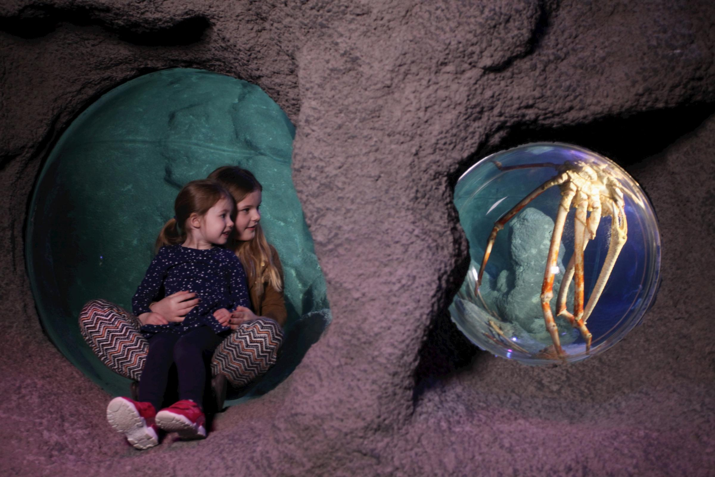 Enter the Lair of the Giant Crab at SEA LIFE Manchester (Picture: Jason Lock)