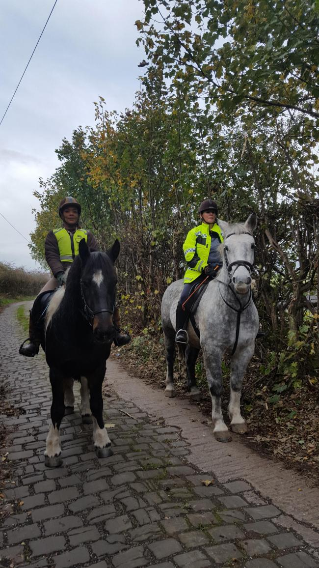 Second 'big cat' sighting sends horses into a frenzy in Bury